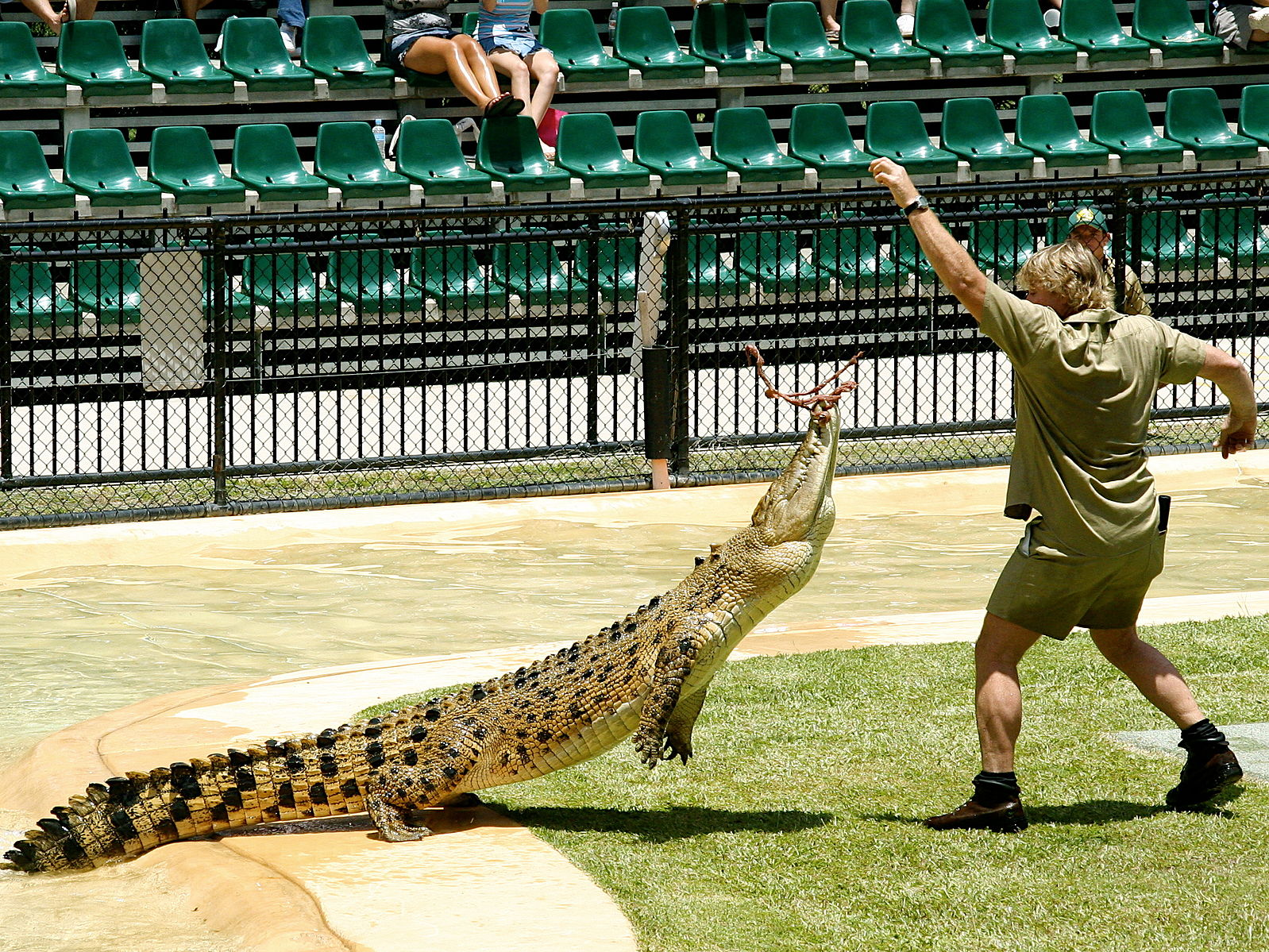Steve Irwin S Birthday Doodle Turns Into An Ethical Debate Est 1933