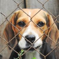 Puppy mills: Adopt, don't shop